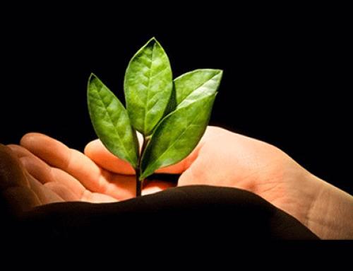 Le marché du bio a-t-il besoin de soigner sa e-réputation ?