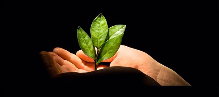 E-réputation et marché du bio